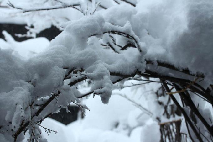 雪の重みでしなる木の枝