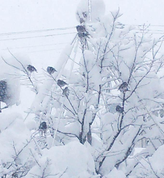 木にとまっている8羽のムクドリ