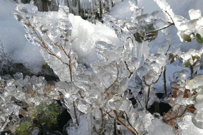 木や草も完全に氷に包まれました。
