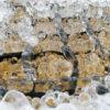 あまりの寒さに氷筍が発生しました。
