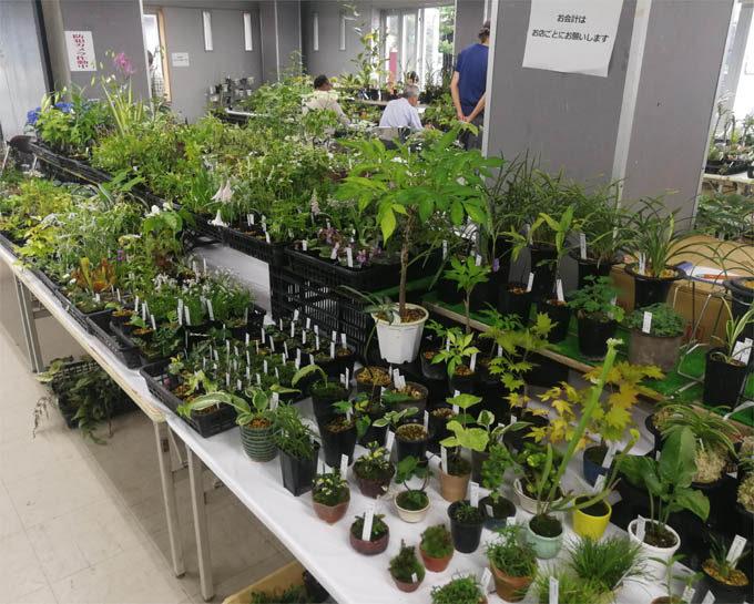 斑入り植物全般をあつかう、野田園芸山野草センターさん。