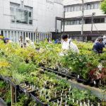 2018/9/28~30 秋の山野草と盆栽大即売会! (於上野グリーンクラブ)