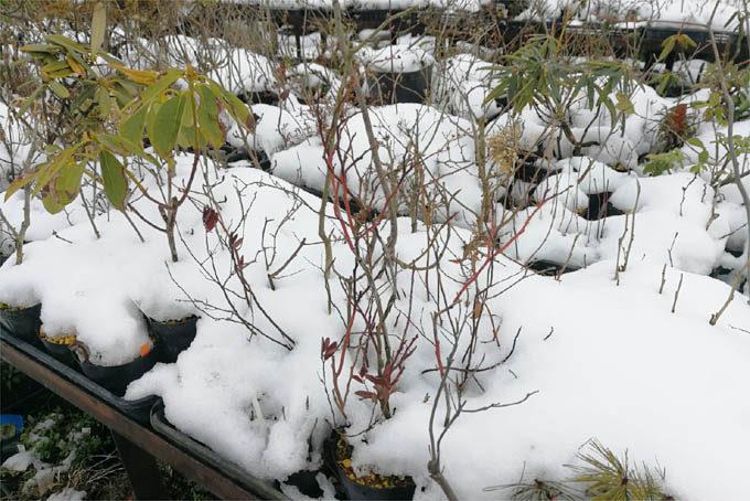 雪。今年は少ないほうでしょうか。