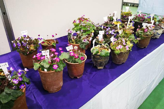 県の花大会 展示品