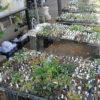 来年1月はボロ市と、「第49回全国小品盆栽銘品展」に参加します!