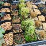 上野グリーンクラブで開催される「全国小品盆栽銘品展」に出店します!その後は続けて世田谷ボロ市です。