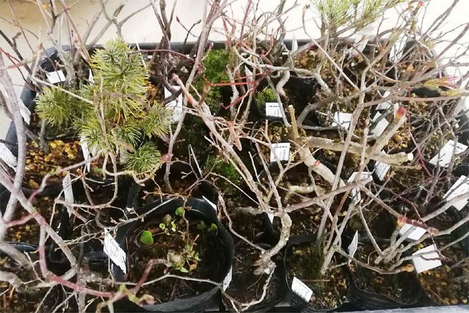 雑木もいろいろな種類があるので、みているとなかなか面白いものです。