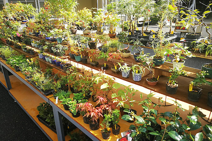 小品盆栽などもたくさん出品されます。